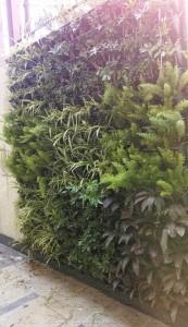 Vertical_Garden_Green_wall_Delhi_India18