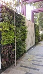 Vertical_Garden_Green_wall_Delhi_India22
