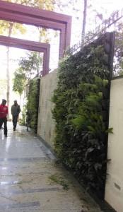 Vertical_Garden_Green_wall_Delhi_India24