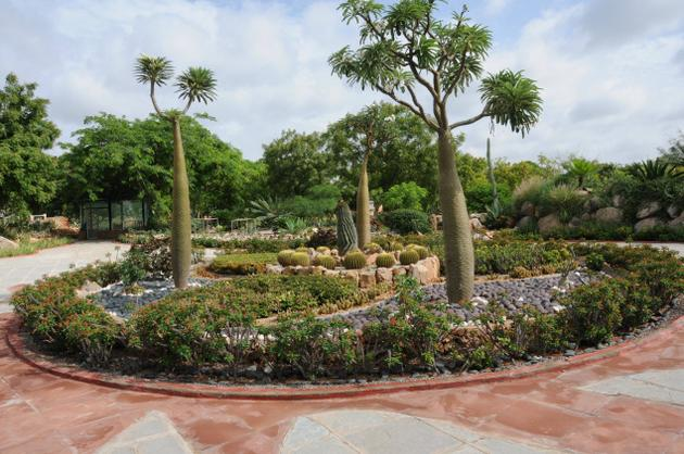 Xeriscaping in India